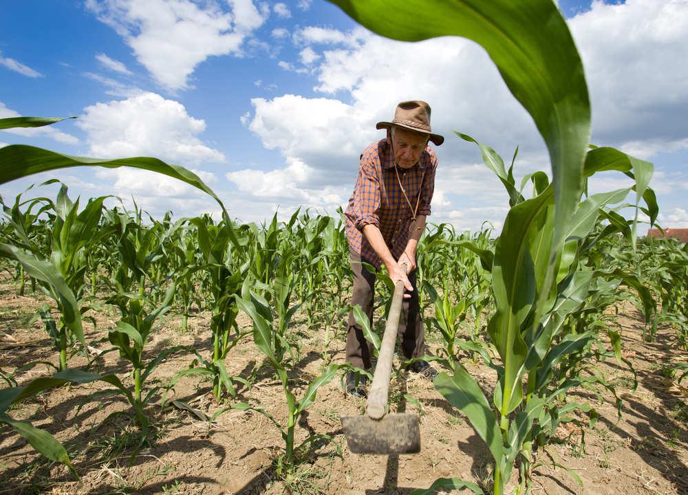 El sector de la agricultura en España
